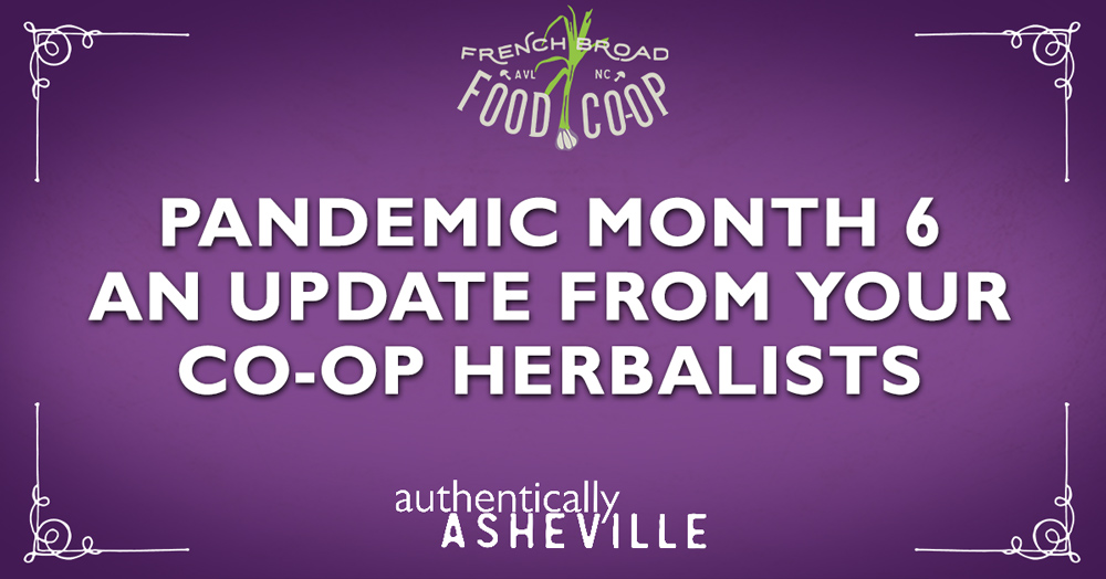 Pandemic Month 6: An update from your Co-op Herbalists